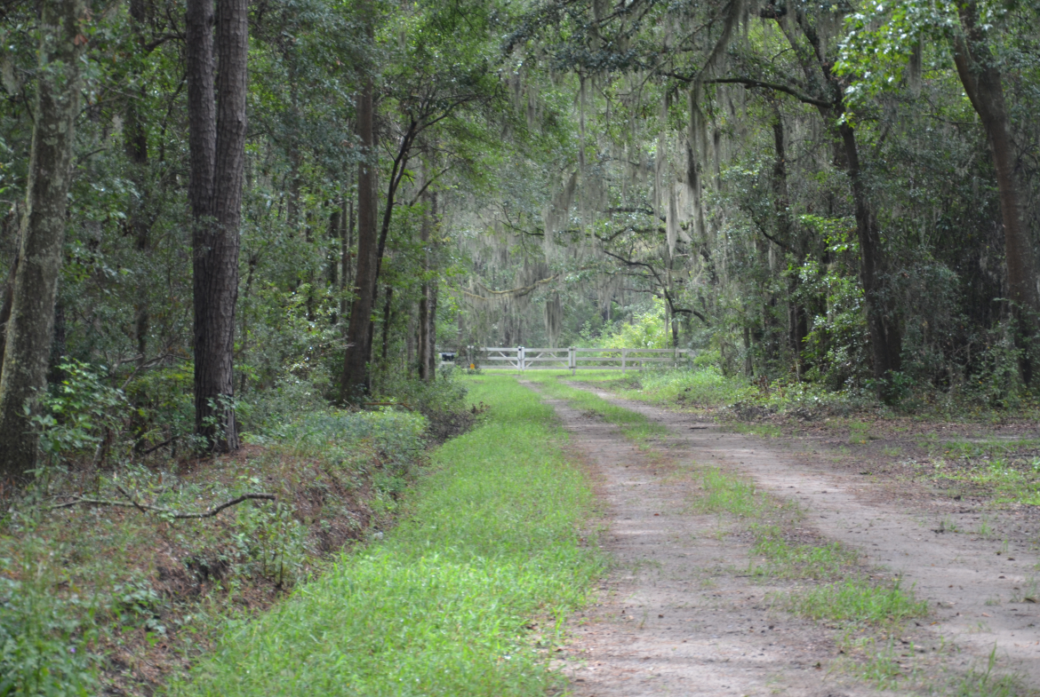 Pintail Plantation for sale in Jasper Co SC